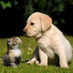 Wie Hund Und Katz Warum Mögen Sich Hunde Und Katzen Nicht