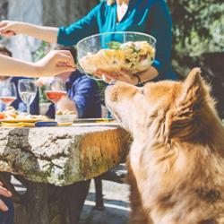 Die größten Fehler bei der Hundefütterung