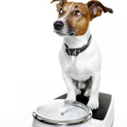 Übergewicht bei Hunden bekämpfen
