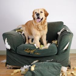 Haftung des Hundehalters