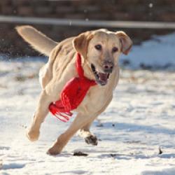 Können sich Hunde erkälten?
