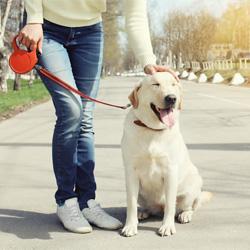 Was tun wenn der Hund unterwegs alles frisst