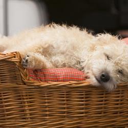 Schlafverhalten Hund