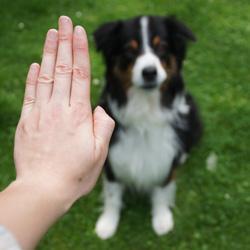 Kommandos für den Hund