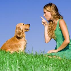 Mögliche Gründe, warum der Hund nicht gehorcht