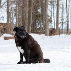 Frieren Hunde im Winter
