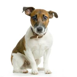 Wie vertragen Hunde die Zeitumstellung