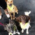 hundefuttertester galerie
