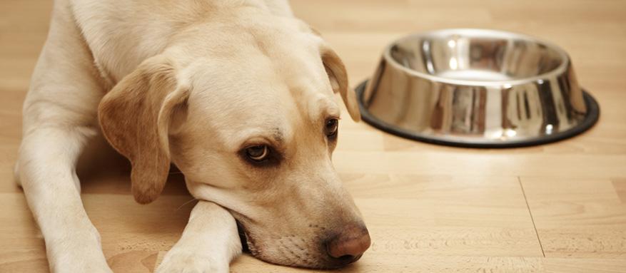 Warum frisst mein Hund nicht